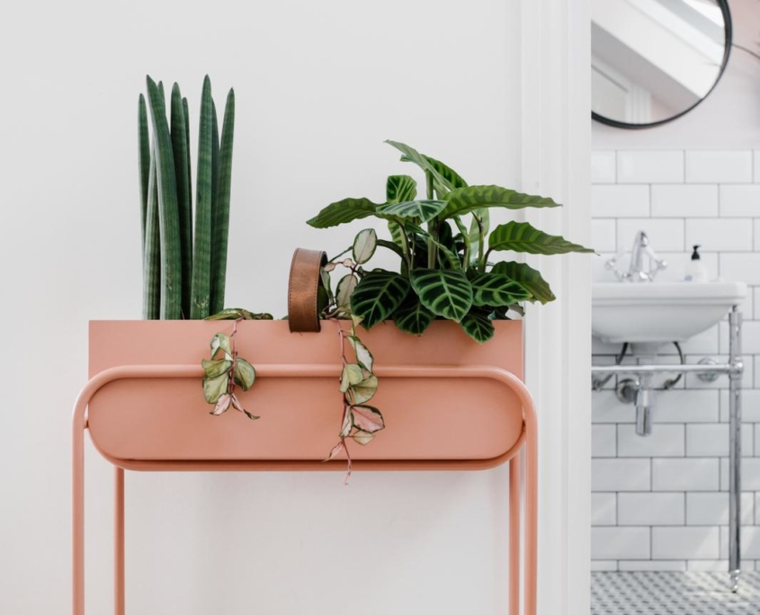 Pink metal table with green plants on top